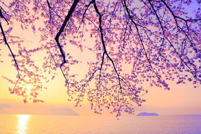 5滋賀縣海津大崎2017年八大日本春季必訪秘境!美得讓人療癒窒息.jpg