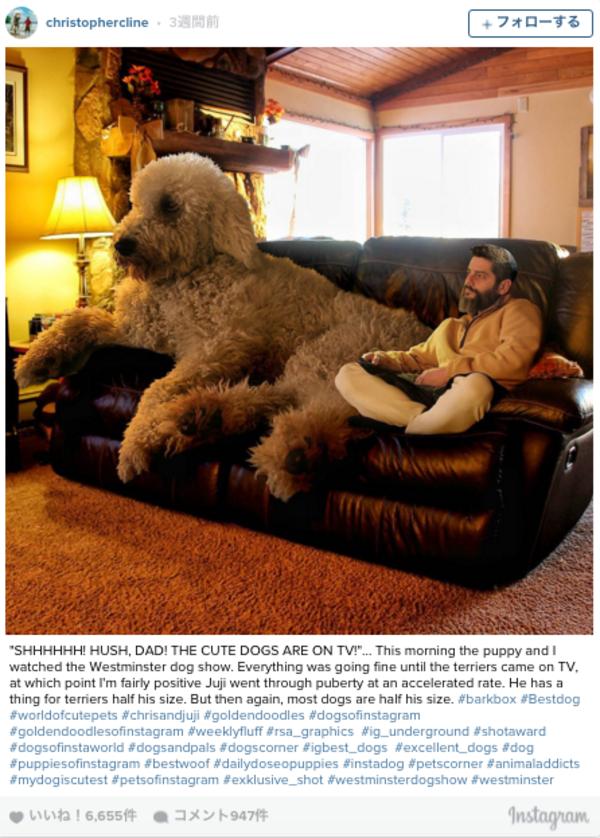 感動!攝影師Christopher Cline紀錄與他愛犬Juji的生活點滴2.png