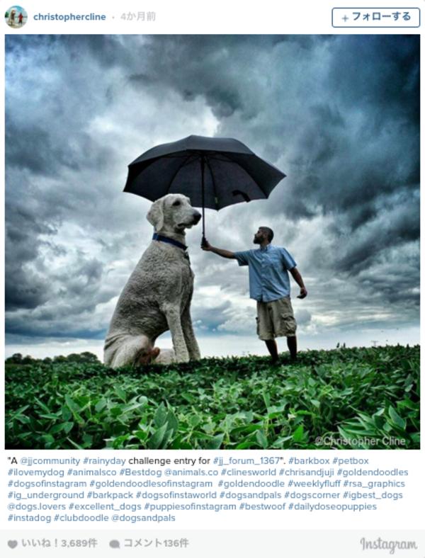 感動!攝影師Christopher Cline紀錄與他愛犬Juji的生活點滴5.png