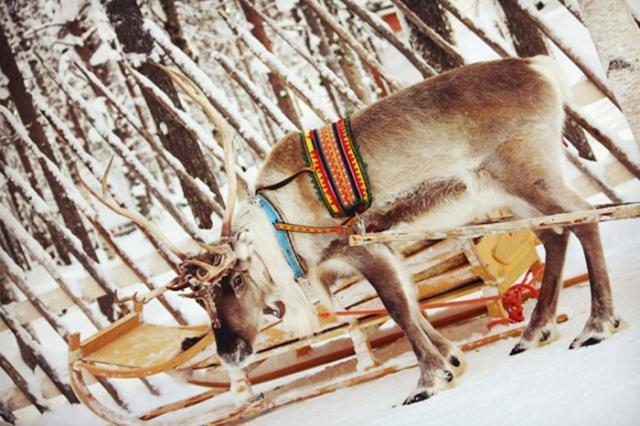 芬蘭馴鹿雪橇2017年北歐自由行攻略!追尋極光之旅(附件:行程規劃、住宿、行前準備)5.8.jpg
