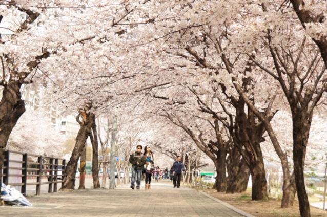 韓國首爾櫻花季五天四夜自由行10.jpg