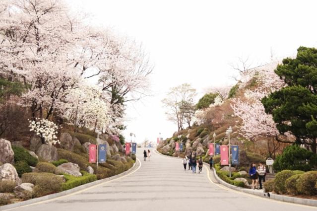 韓國首爾櫻花季五天四夜自由行8.jpg