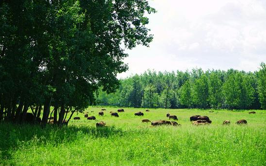 麋鹿島國家公園 Elk Island National Park_1.png
