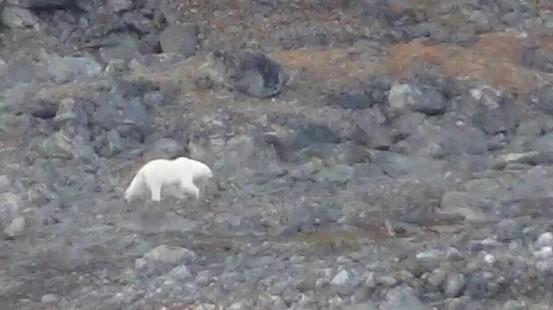 2017年【極地探險】Hello,北極熊!Plancius探險船7日&朗伊爾城2日北極自由行5.jpg