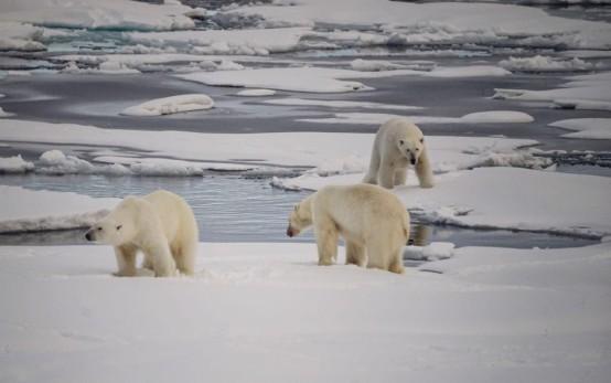2017年【極地探險】Hello,北極熊!Plancius探險船7日&朗伊爾城2日北極自由行6.jpg
