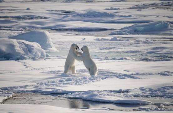 2017年【極地探險】Hello,北極熊!Plancius探險船7日&朗伊爾城2日北極自由行7.jpg
