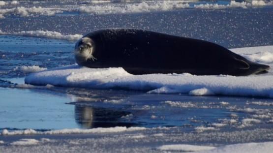 2017年【極地探險】Hello,北極熊!Plancius探險船7日&朗伊爾城2日北極自由行2.jpg