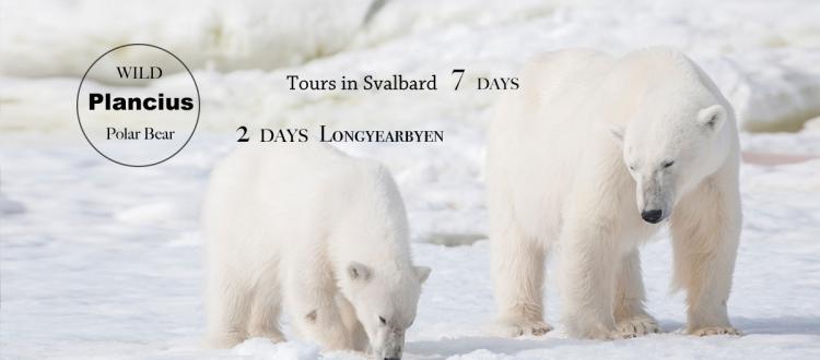 2017年【極地探險】Hello,北極熊!Plancius探險船7日&朗伊爾城2日北極自由行