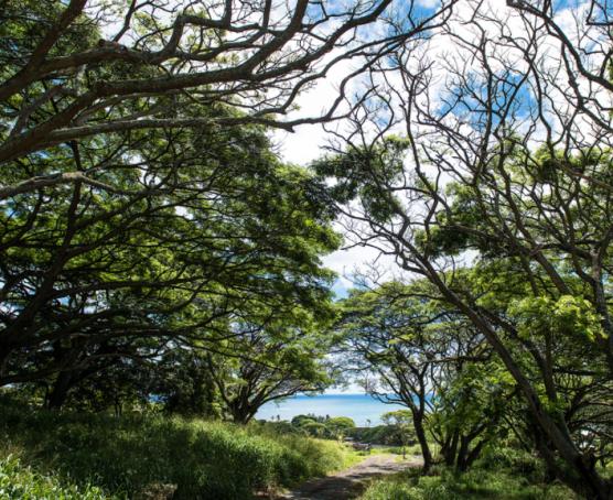 【HELLO!Hawaii】2017年夏威夷歐胡島Oahu自由行行程規劃與攻略古蘭尼牧場Kualoa Ranch13.png