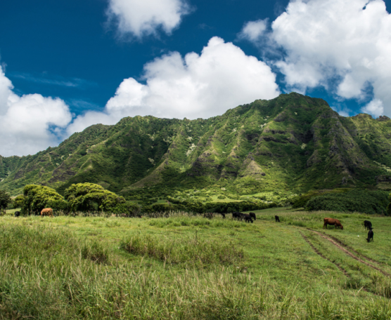 【HELLO!Hawaii】2017年夏威夷歐胡島Oahu自由行行程規劃與攻略古蘭尼牧場Kualoa Ranch14.png