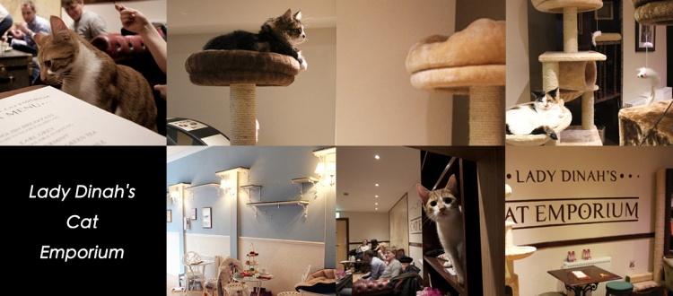 【貓咪。下午茶】Lady Dinah_s Cat Emporium 英國倫敦第一間貓咪咖啡廳