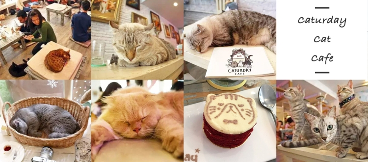 caturday-cat-cafe-0_1