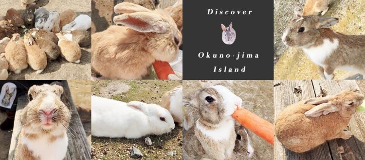 探訪日本最萌兔子島 — 大久野島Okuno-jima Island!準備萌翻吧~優呼_0