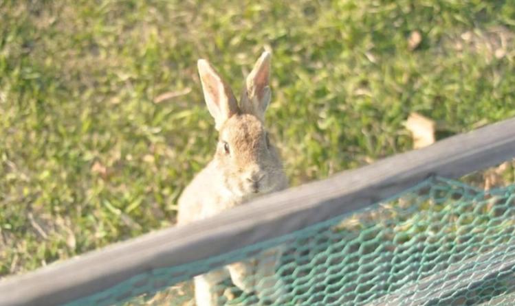 探訪日本最萌兔子島 — 大久野島Okuno-jima Island!準備萌翻吧~優呼_15.png