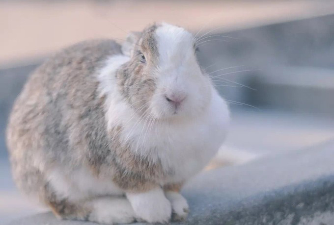探訪日本最萌兔子島 — 大久野島Okuno-jima Island!準備萌翻吧~優呼_18.jpg